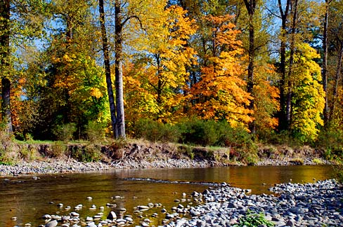 Fall color provides nature filmmakers with great footage