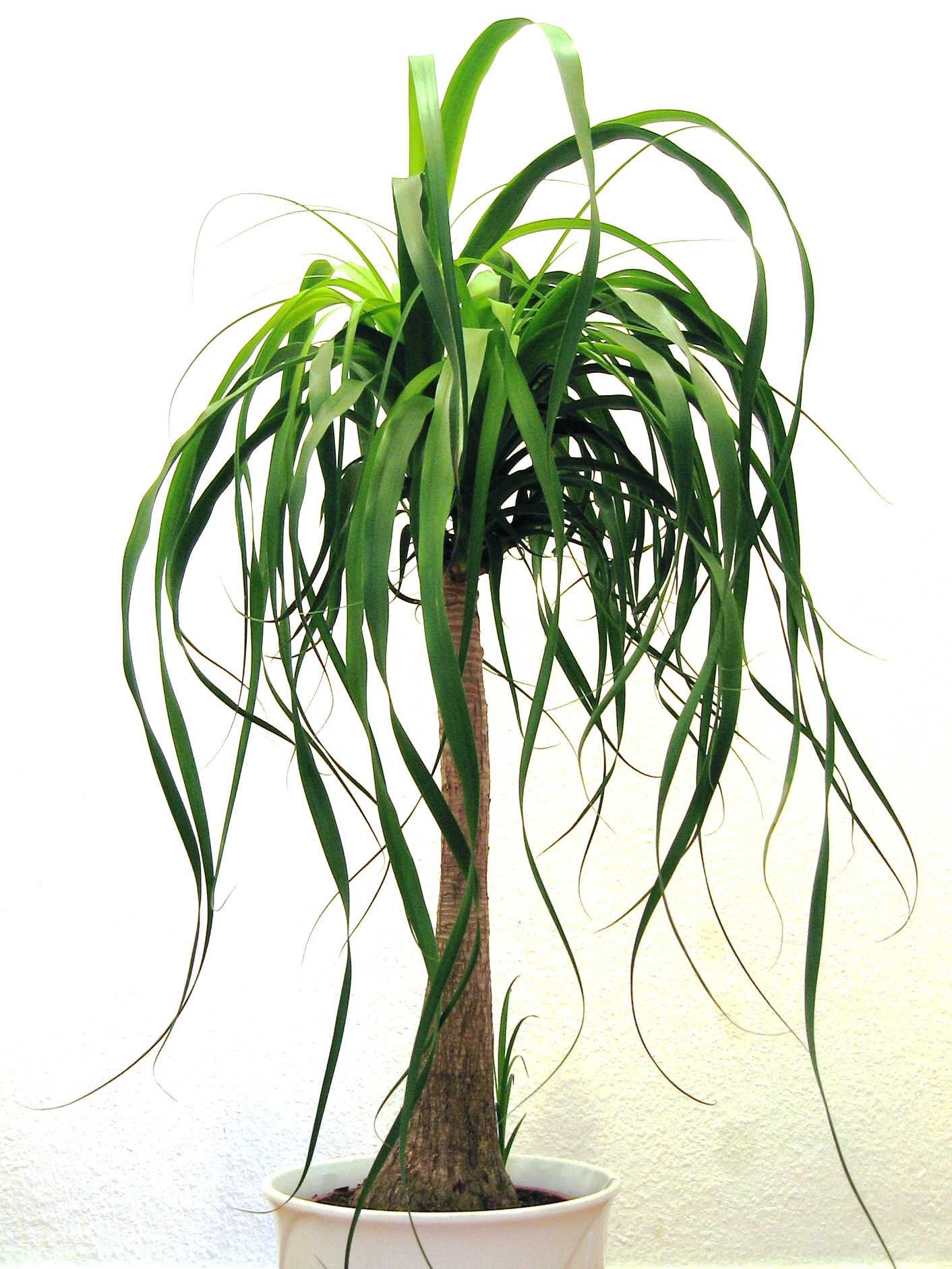 HTML Plante