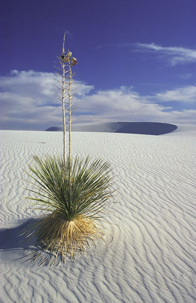White Sands National Monument Travel Guide At Wikivoyage