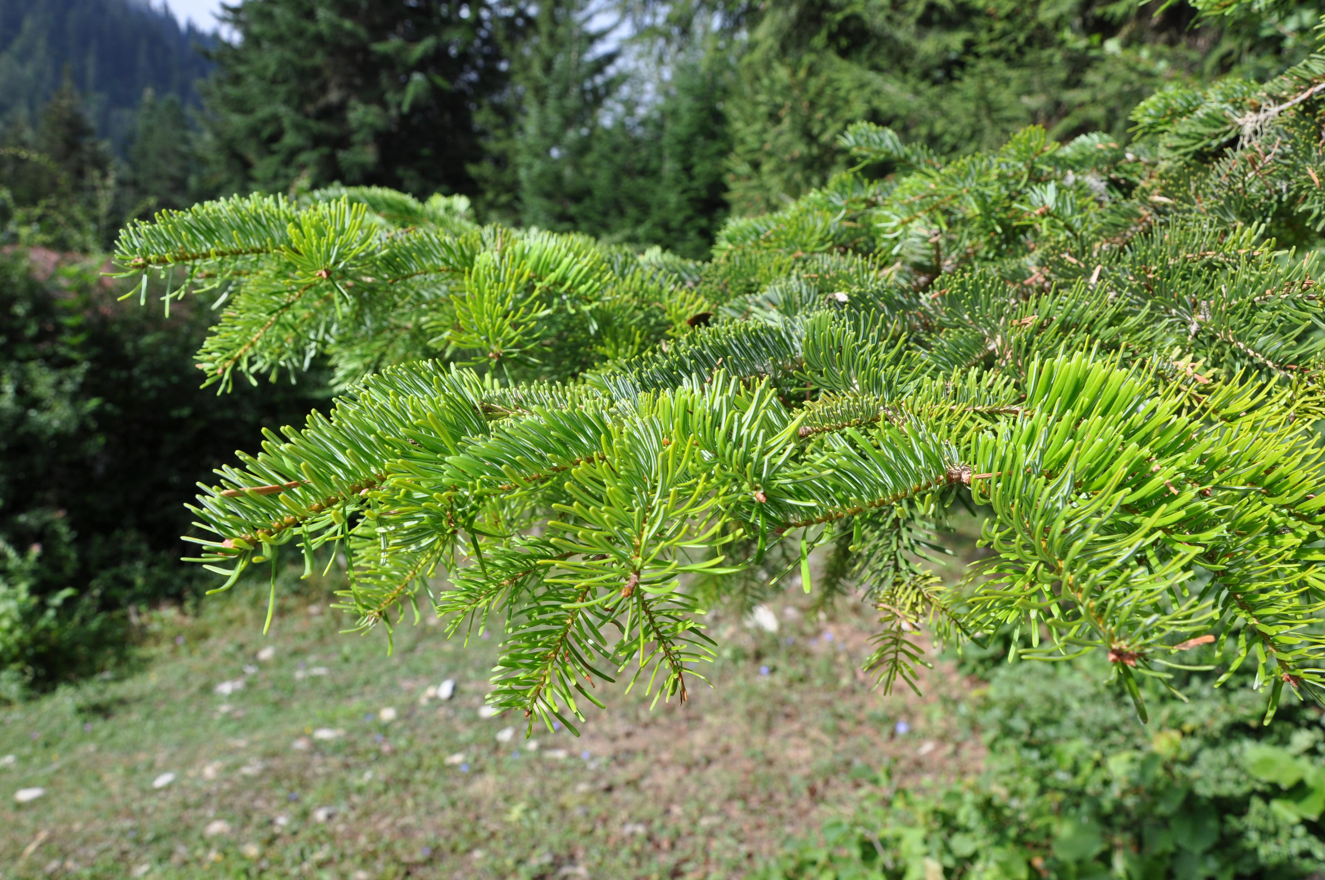 Modelling mooseforest interactions under different predation scenarios