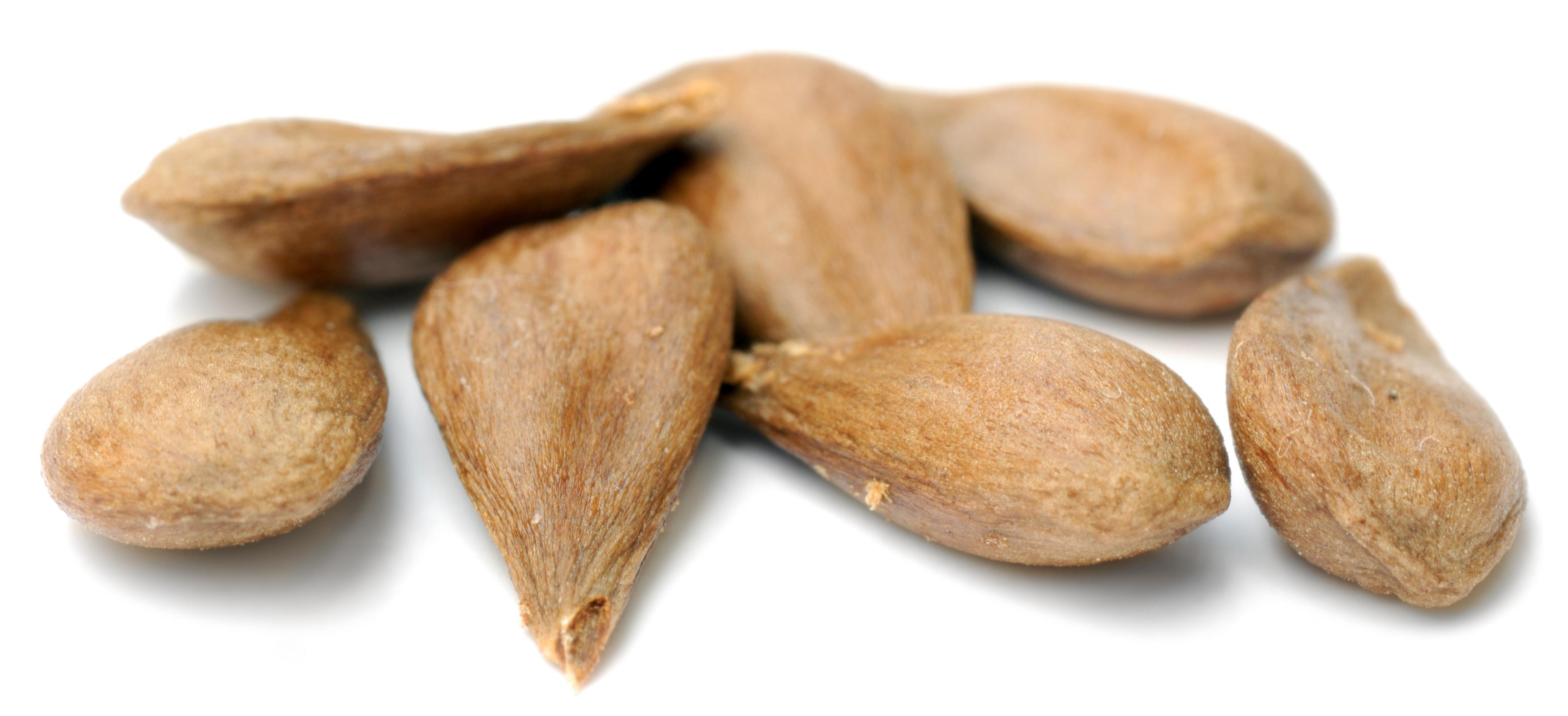 File Apple Seeds - Variety Oldenburg  Aka  Jpg