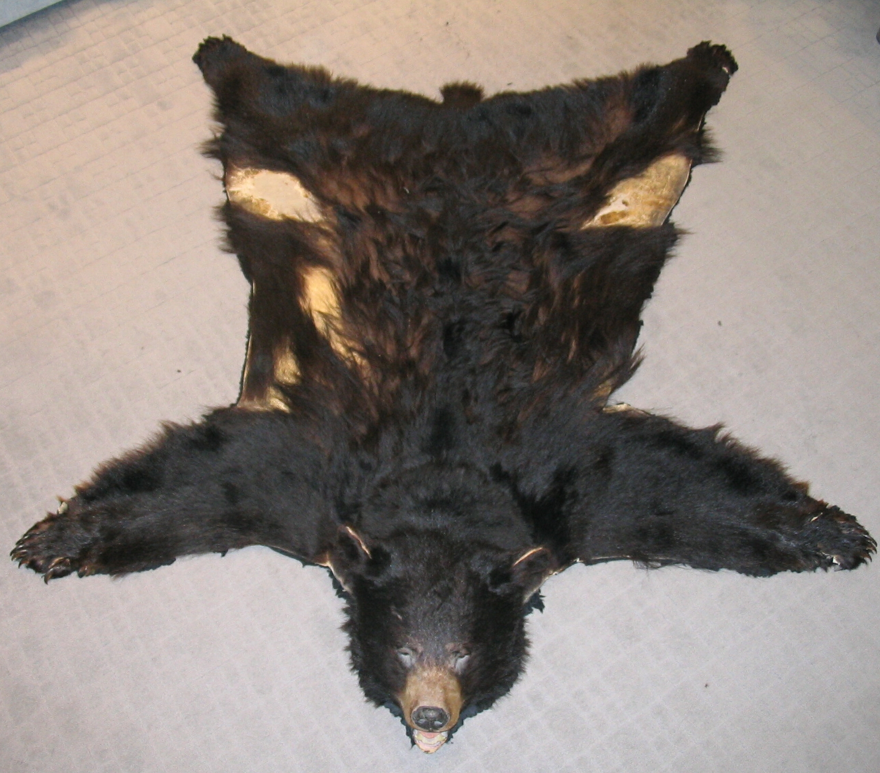 File:Black bear skin with taxidermied head.JPG - Wikimedia ...