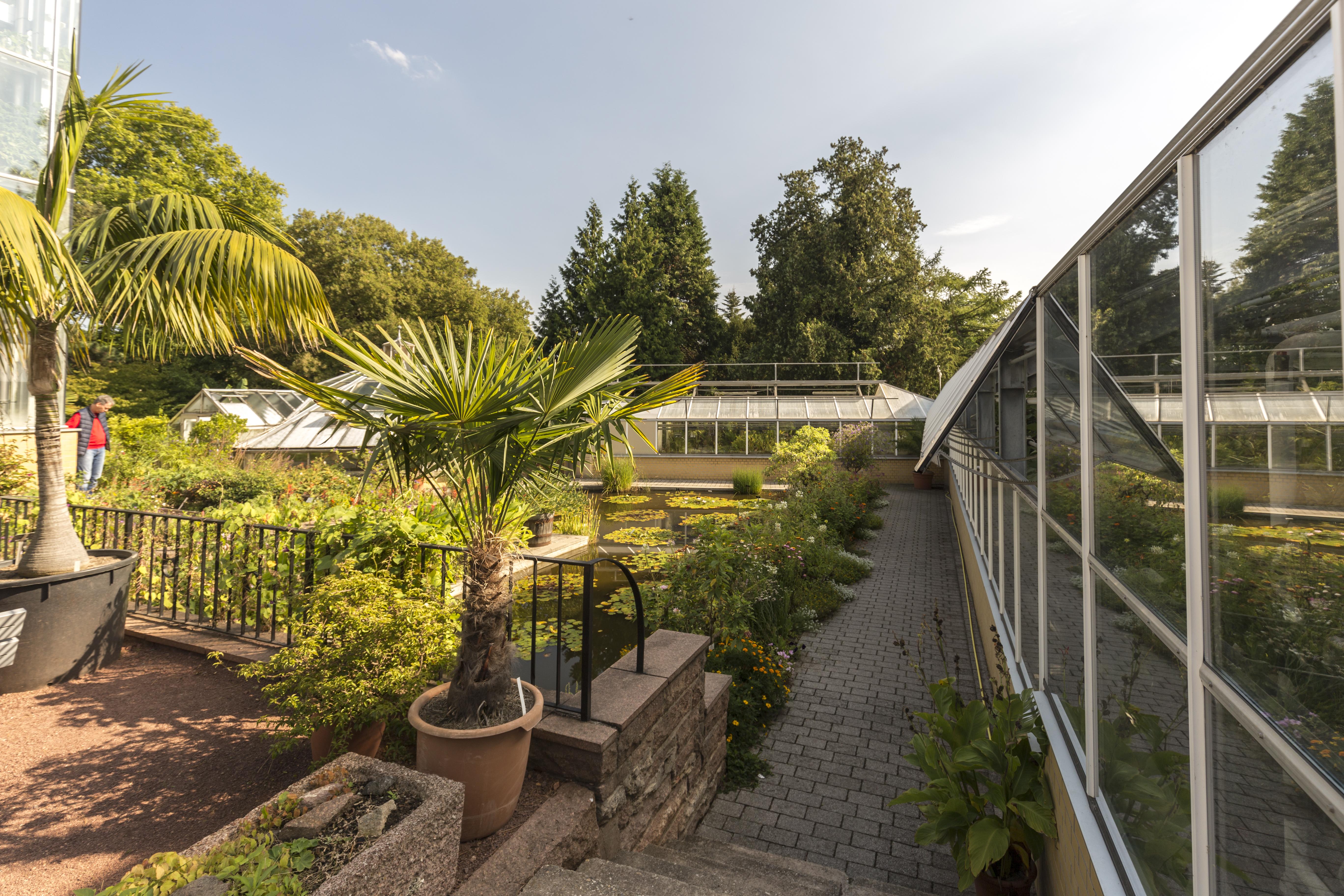 File:Botanischer Garten in Halle Saale - Am Teich tropische ...