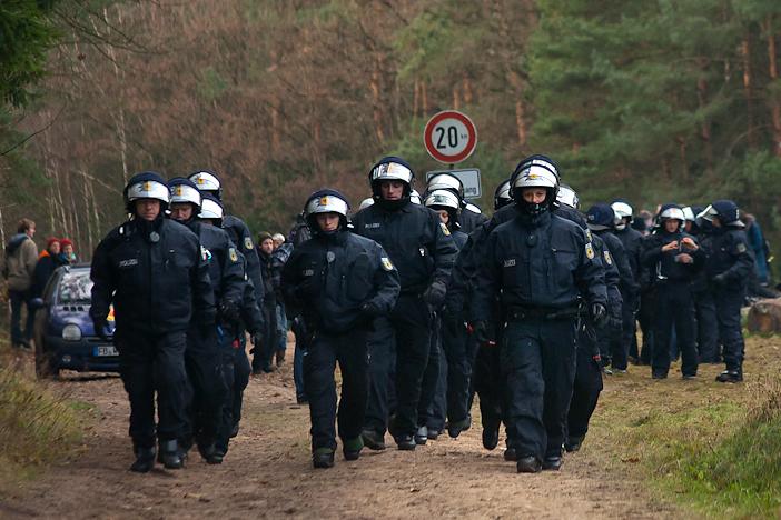 File:Castor 2011 - Monte Göhrde (11) cropped.jpg