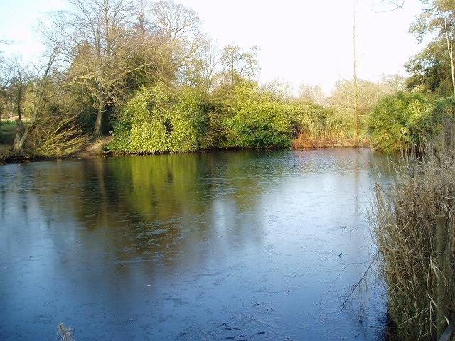 Danbury Lakes - Lower Lake - geograph.org.uk - 332415