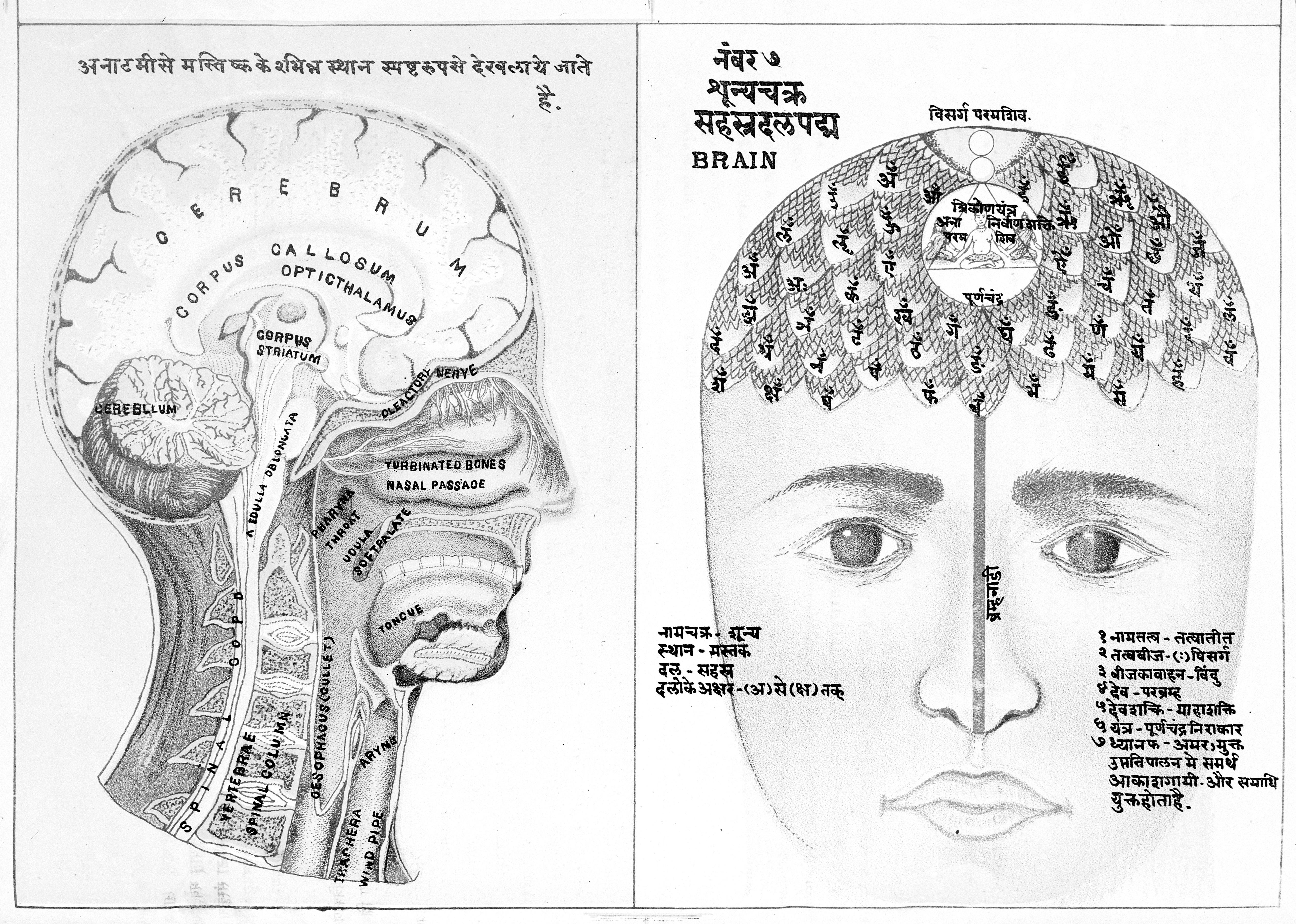 File Diagrammatic Representation Of The Human Head  Wellcome L0018462 Jpg