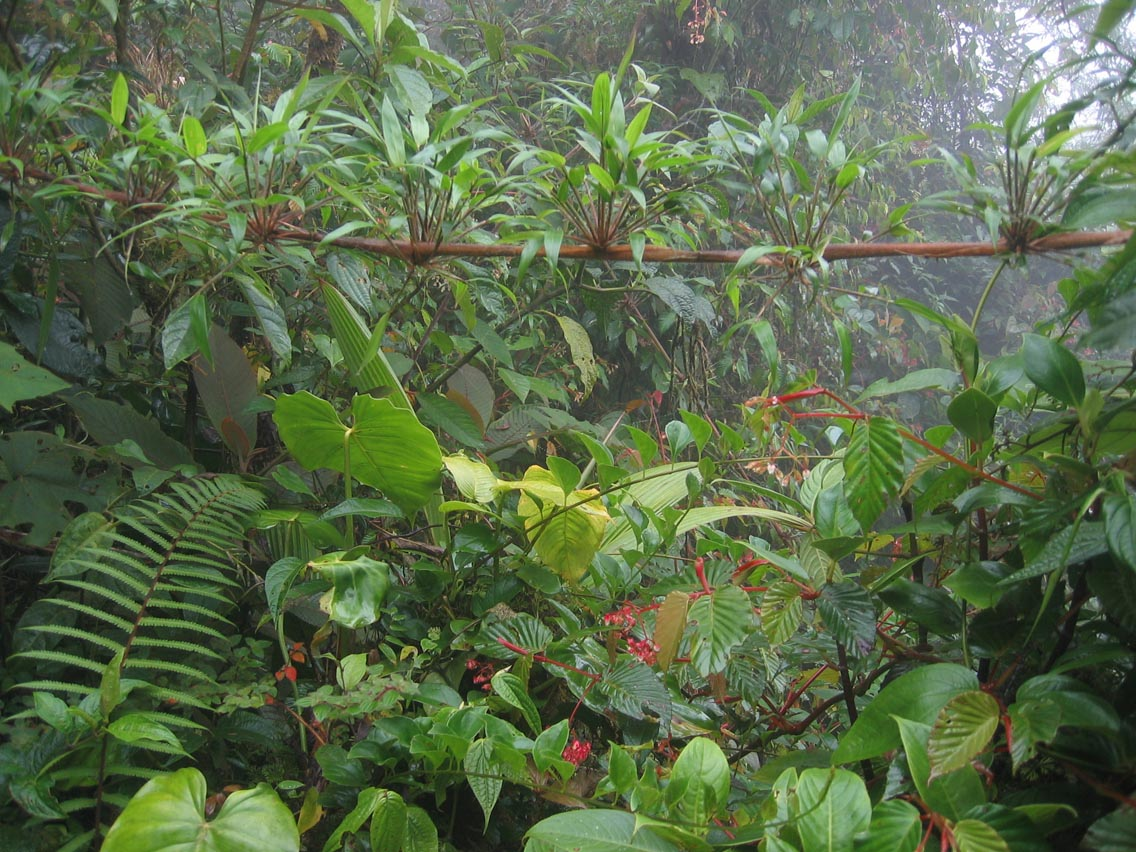 dżungla – Wikisłownik, wolny słownik wielojęzyczny