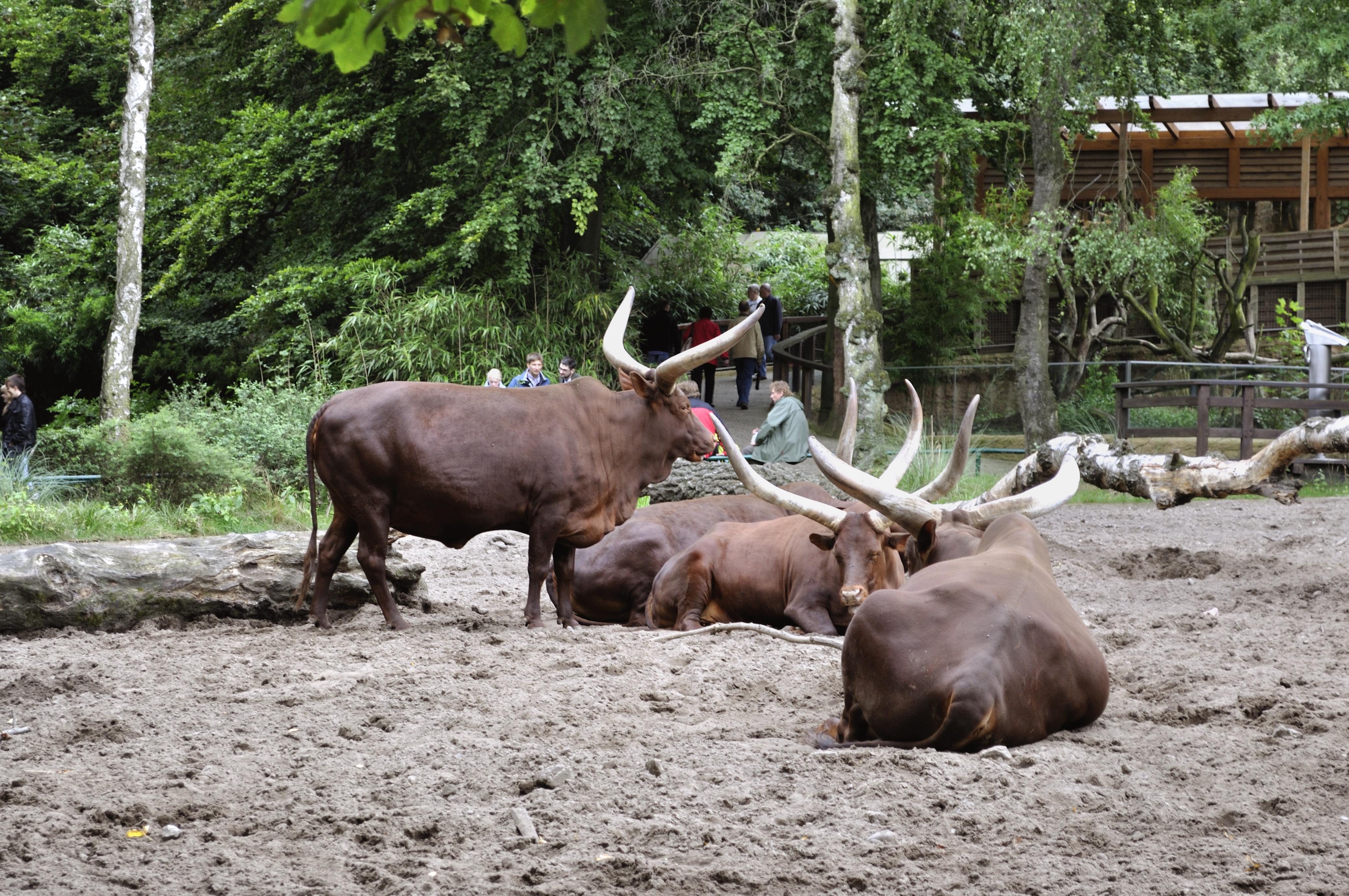 visiting animals in duisburg zoo in duisburg germany 2015 youtube. Black Bedroom Furniture Sets. Home Design Ideas