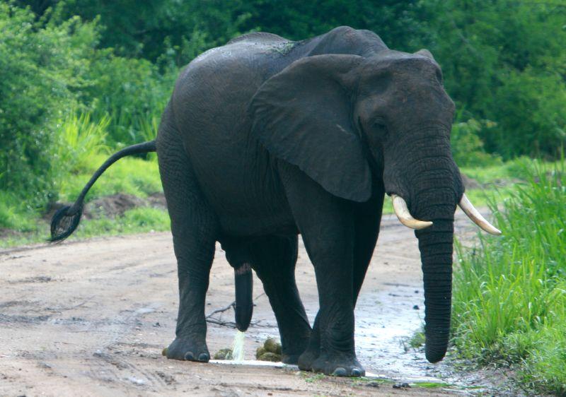 Elephant Games - Free Elephant Games Online Elephant Games