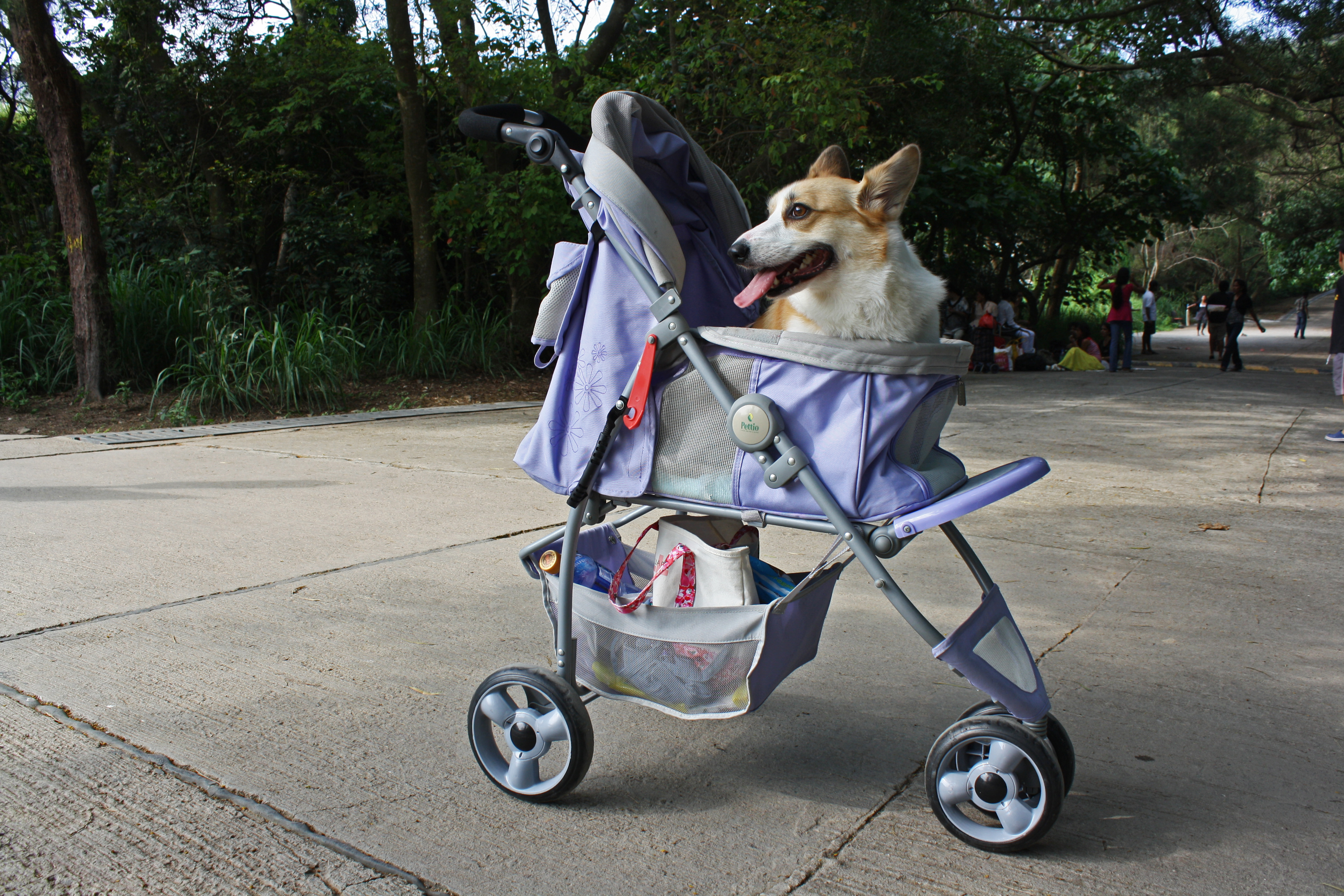 Dog Strollers Reviewed
