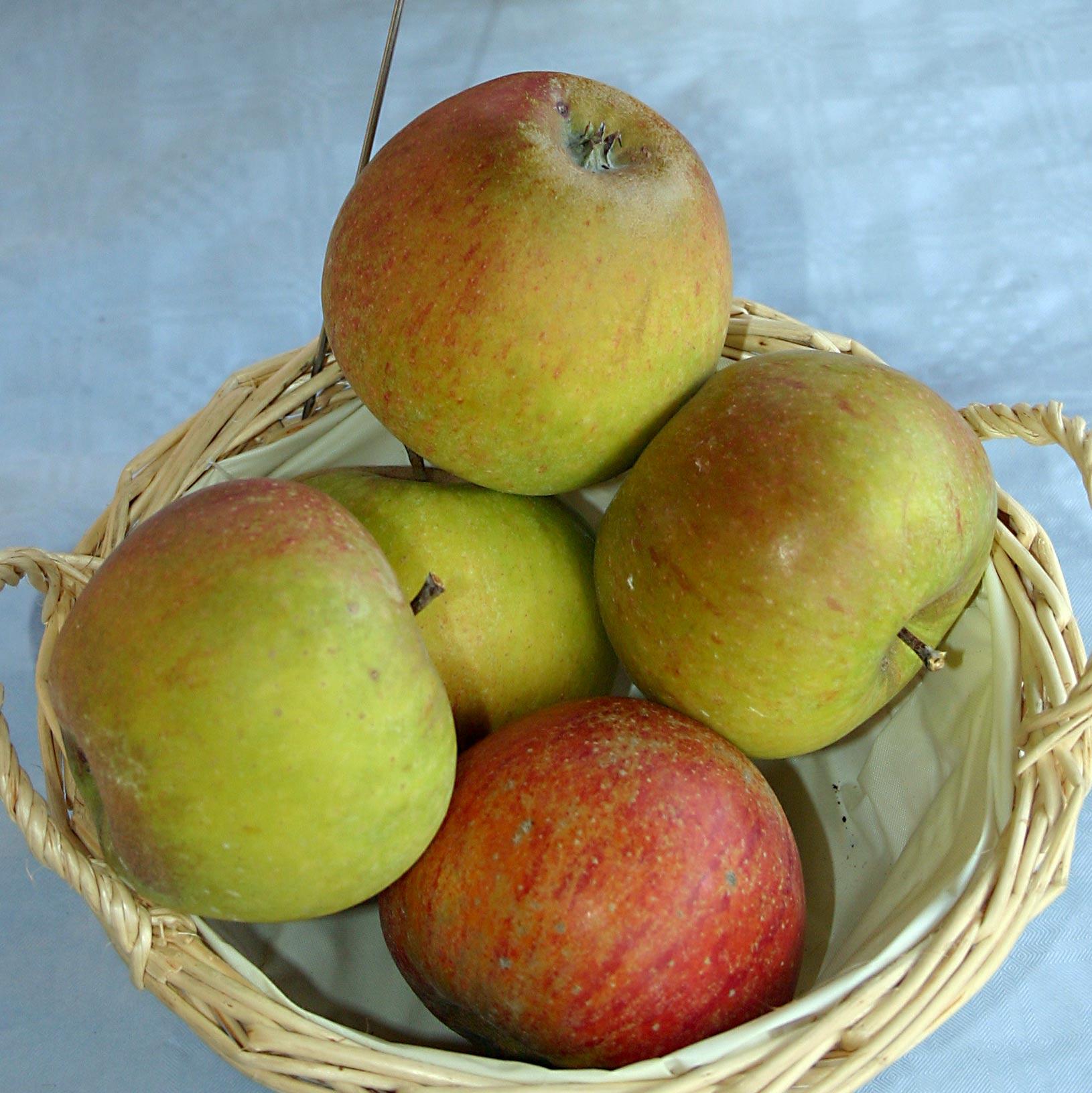 Cox Orange äpplen