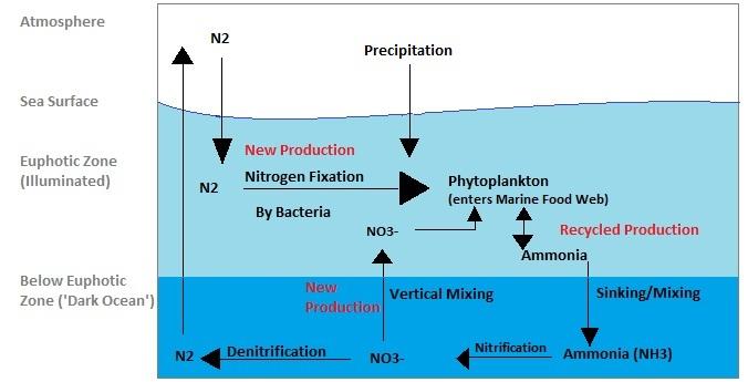 Description marine nitrogen cycle
