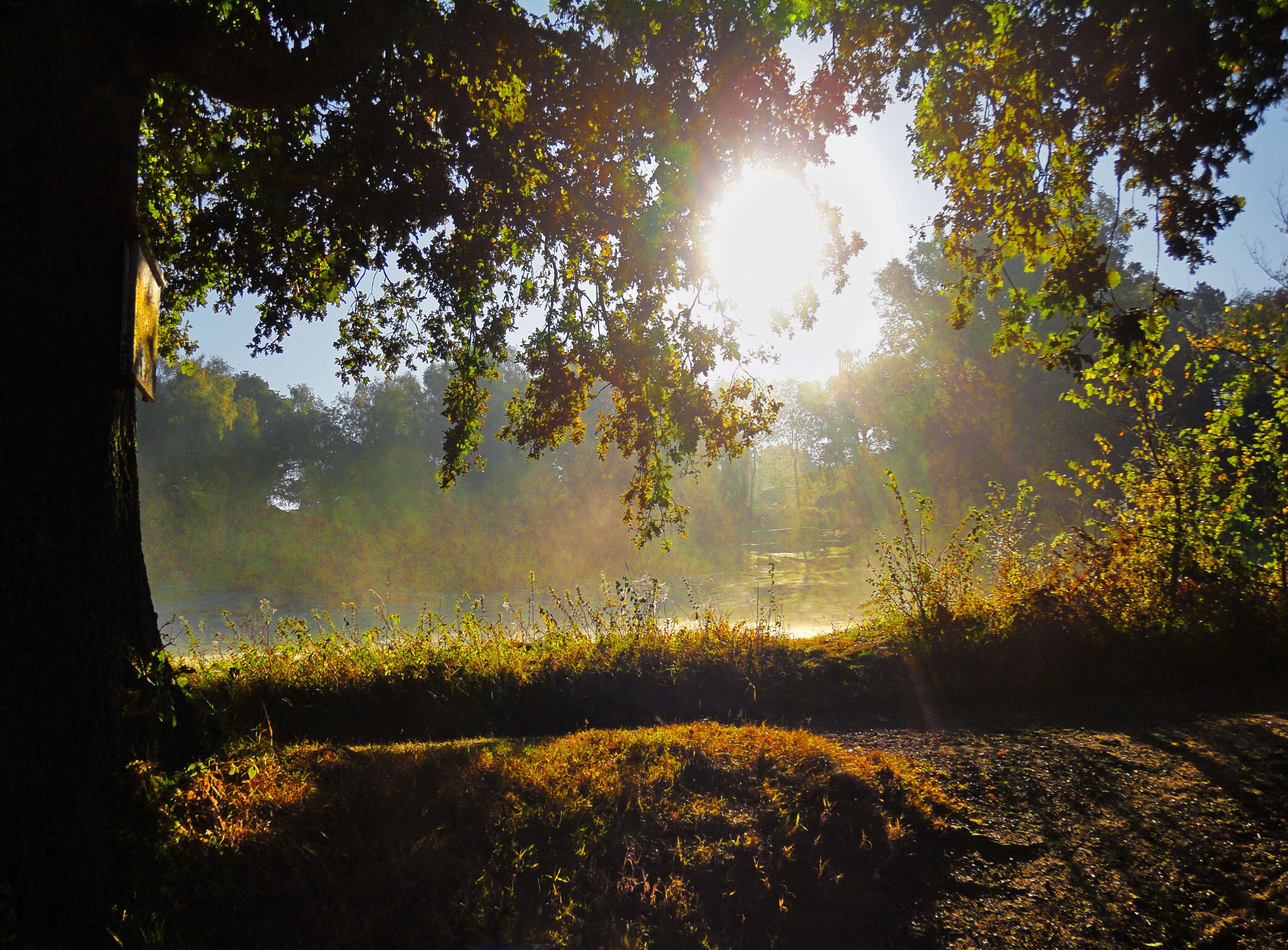 Morning Light >> File Morning Light Reigate Uk 6671828199 Jpg Wikimedia Commons