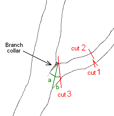 Pruning trees and shrubs - 3 point cut - Wikimedia Commons