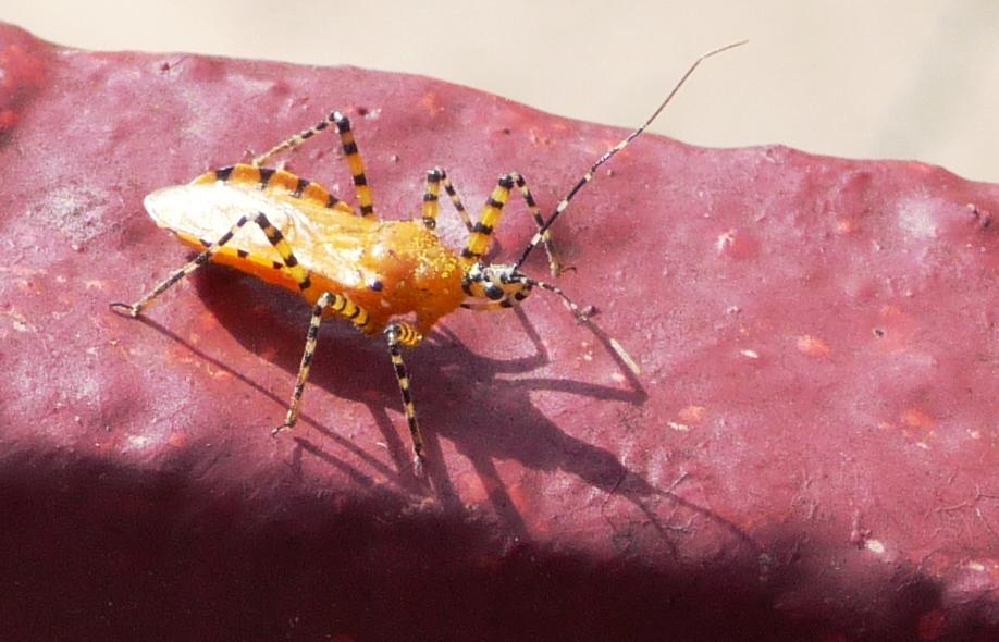 Champion Pest Control Boynton Beach Fl