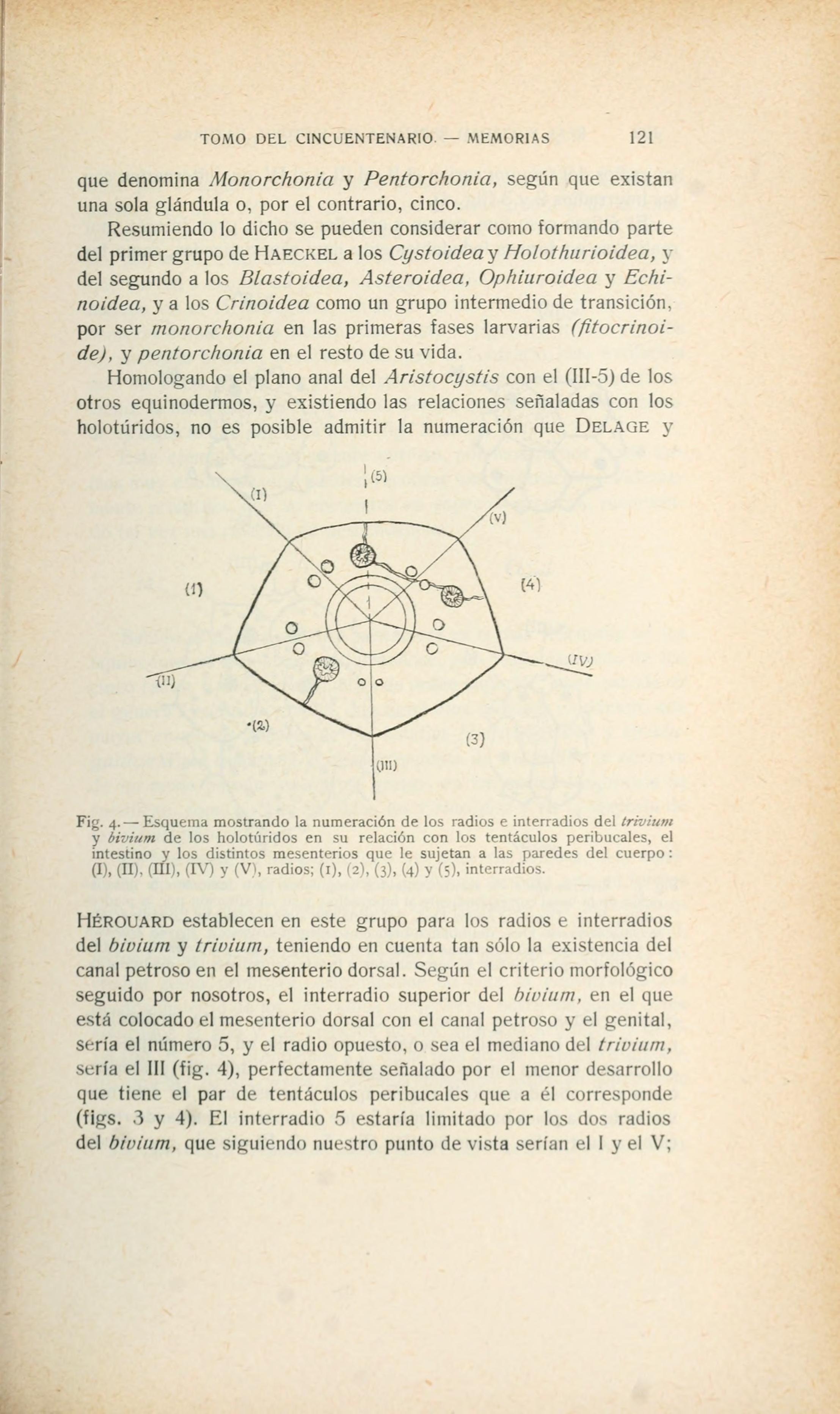 Real Sociedad Española de Historia Natural (Page 121) BHL23591298.jpg Real Sociedad Española de Historia Natural. Tomo extraordinario publicado