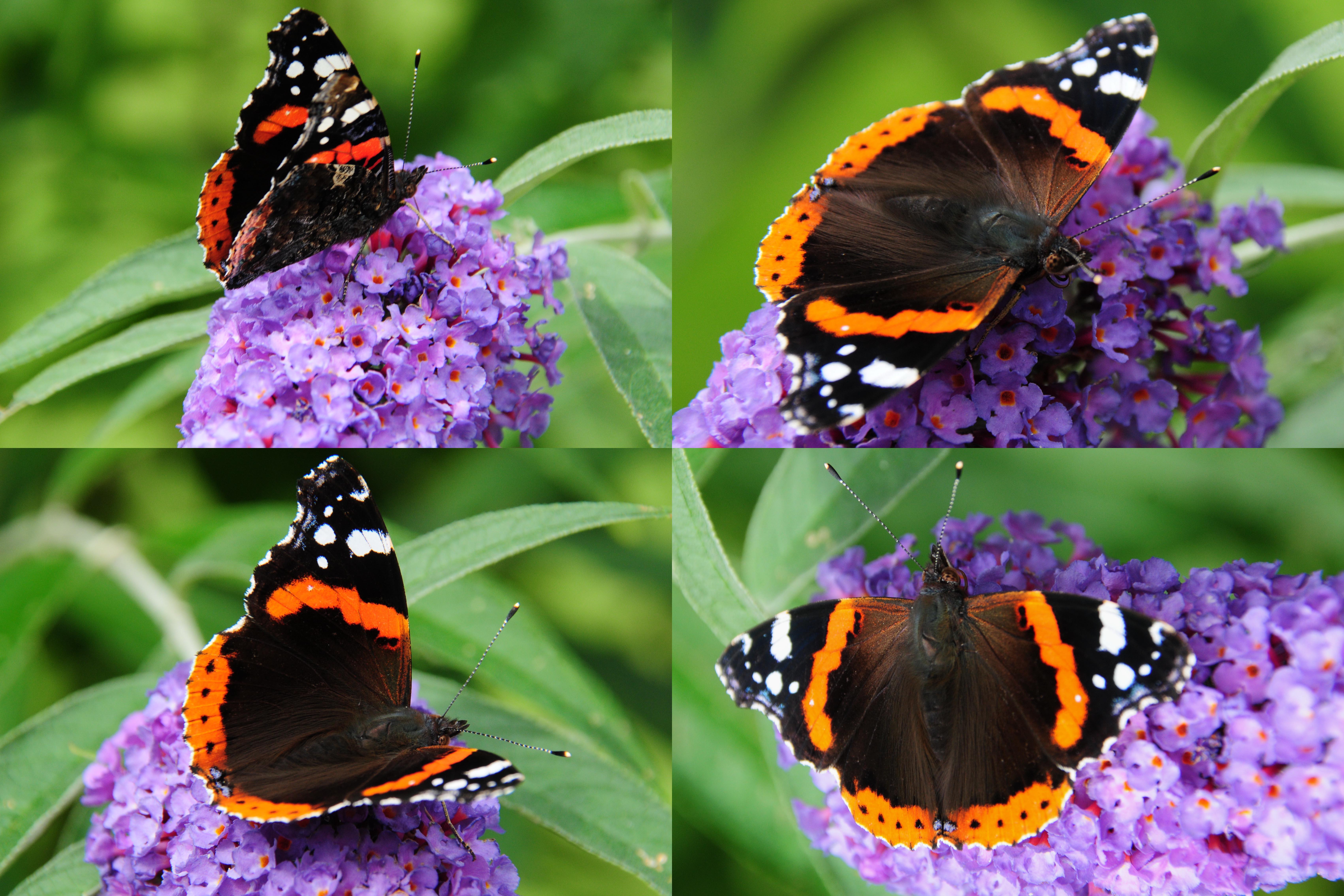 dating site vlinder