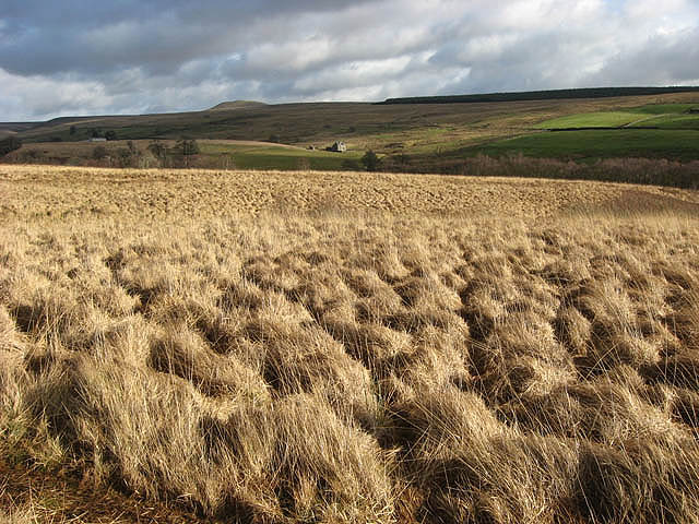 File:Rough grazing at Rashiel Sike - geograph.org.uk - 680020.jpg