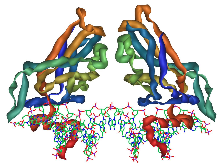 Белки структуры белка картинки