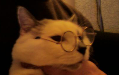 Tinsel the cat, wearing glasses