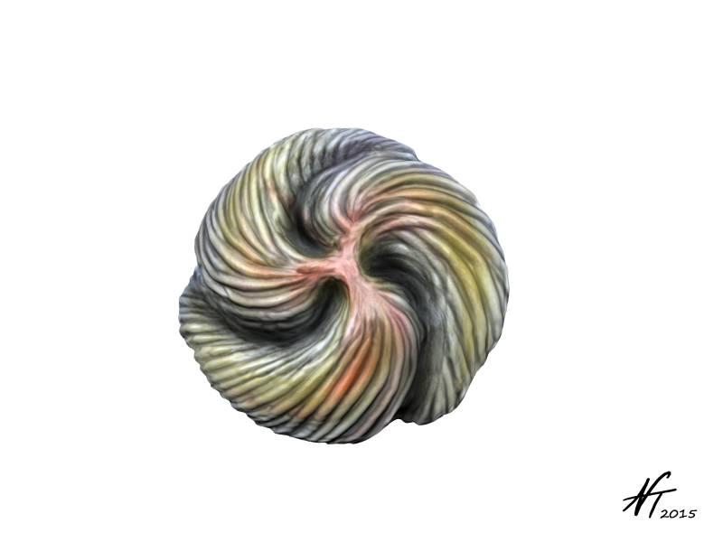 tribrachidium