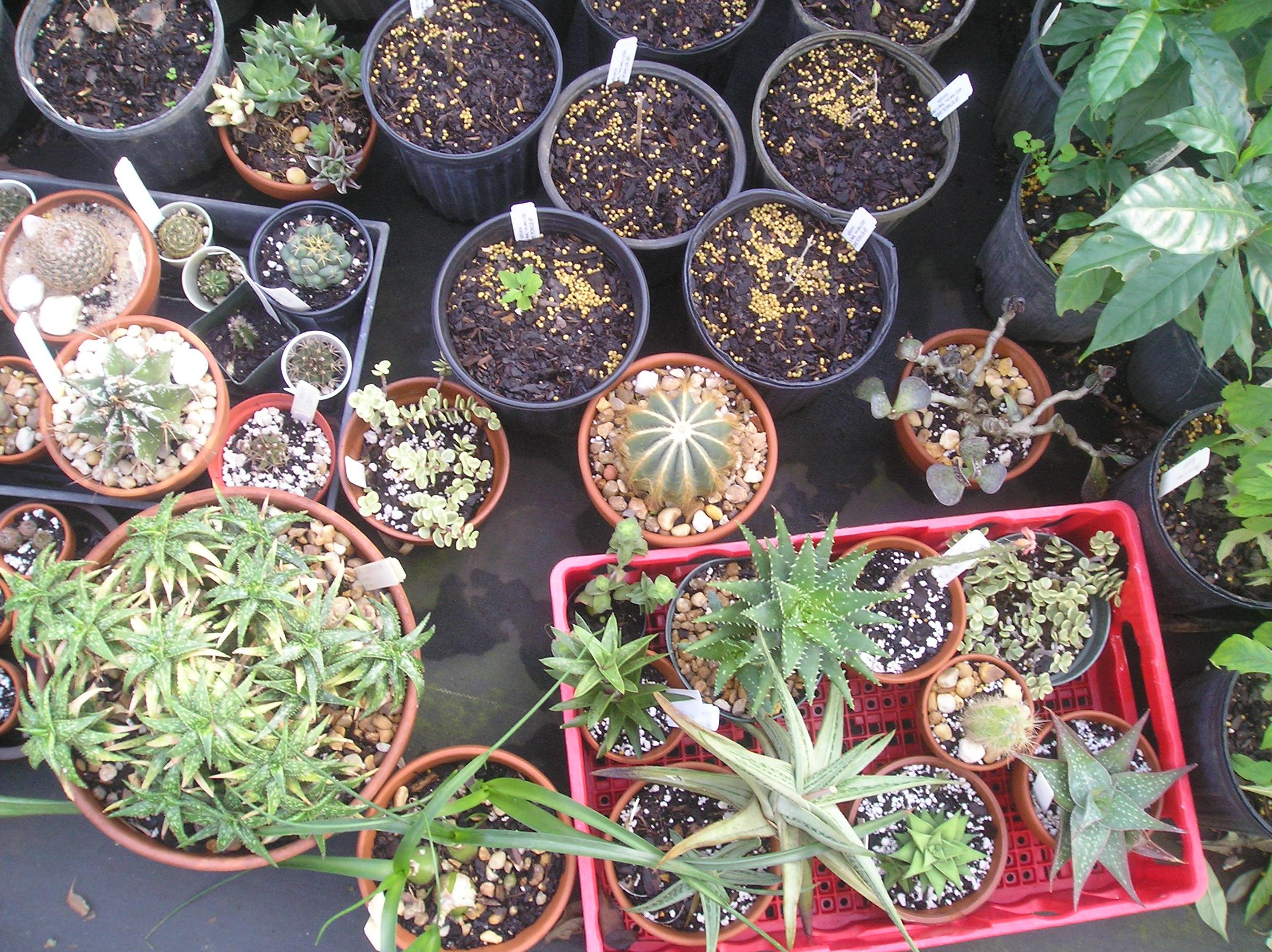 File:USF Botanical Garden1.JPG