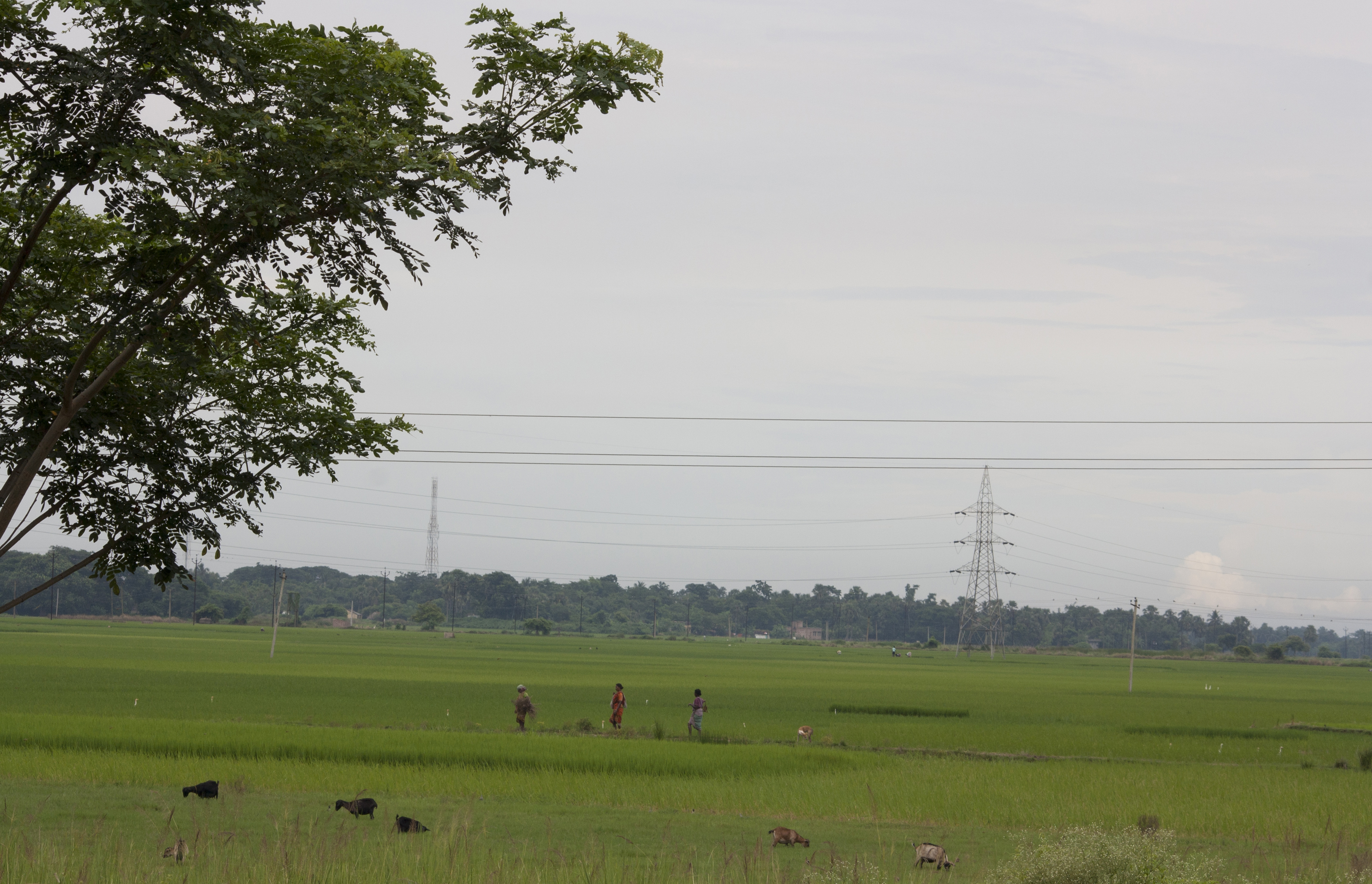 File:Village of West Bengal 11 jpg - Wikimedia Commons