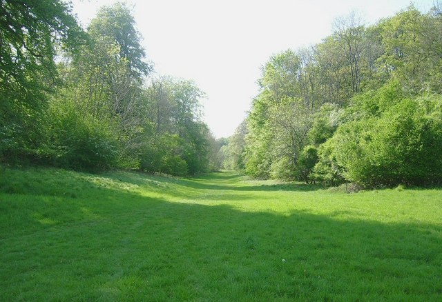 Wychwood Forest (woodland avenue) - geograph.org.uk - 1440002