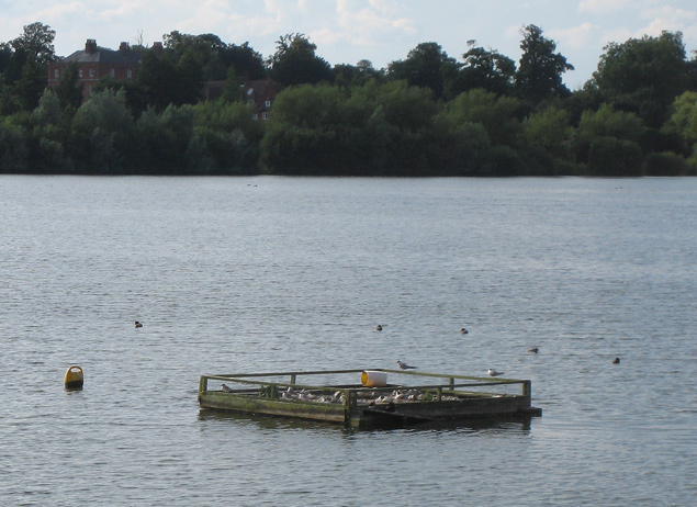 Artificial island for terns on Alton Water - geograph.org.uk - 498369
