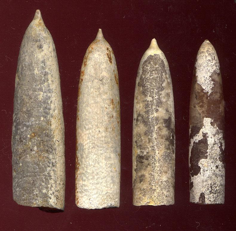 fossiles de belemnites