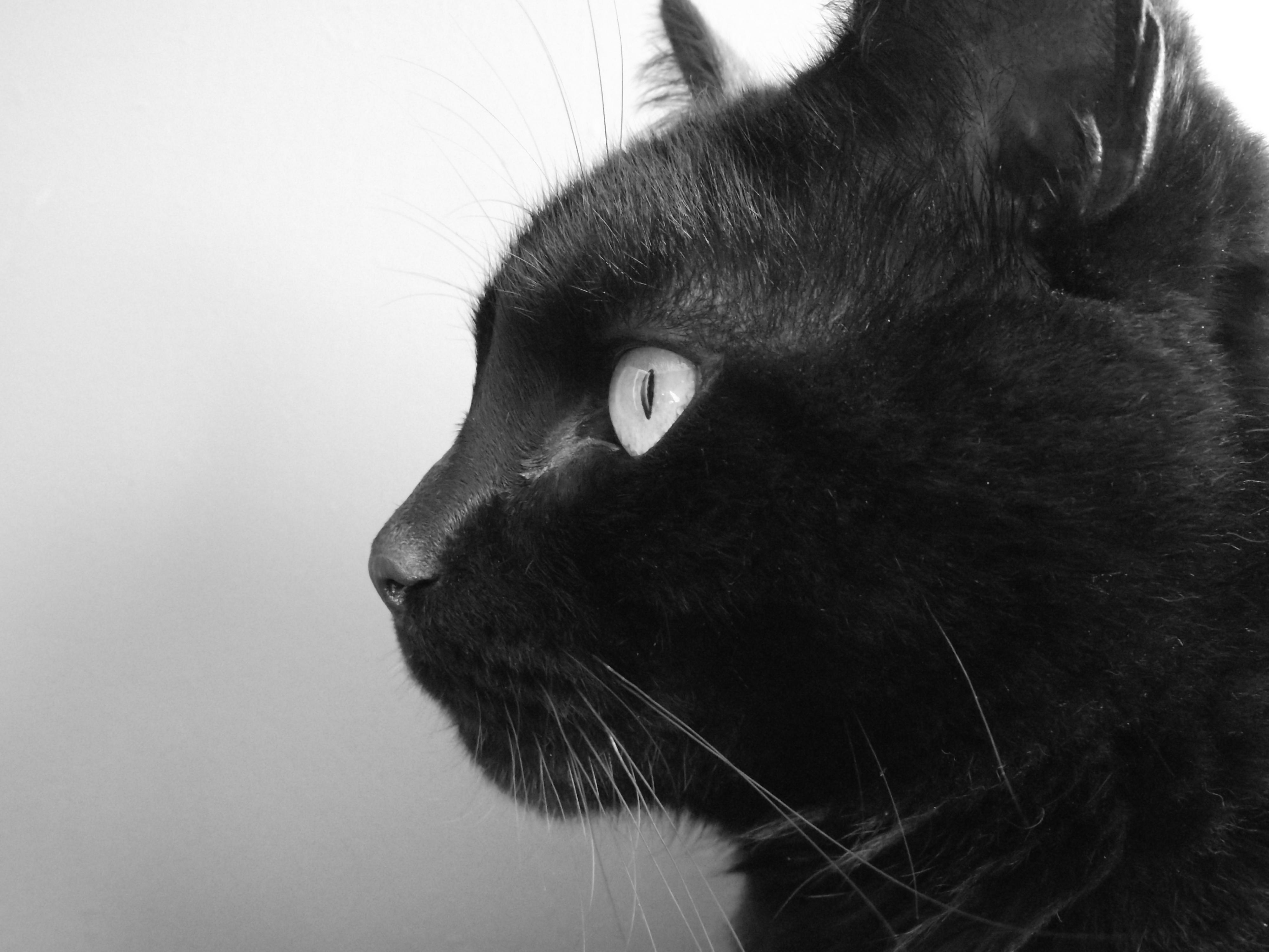 Black_Cat_-_Tim.jpg