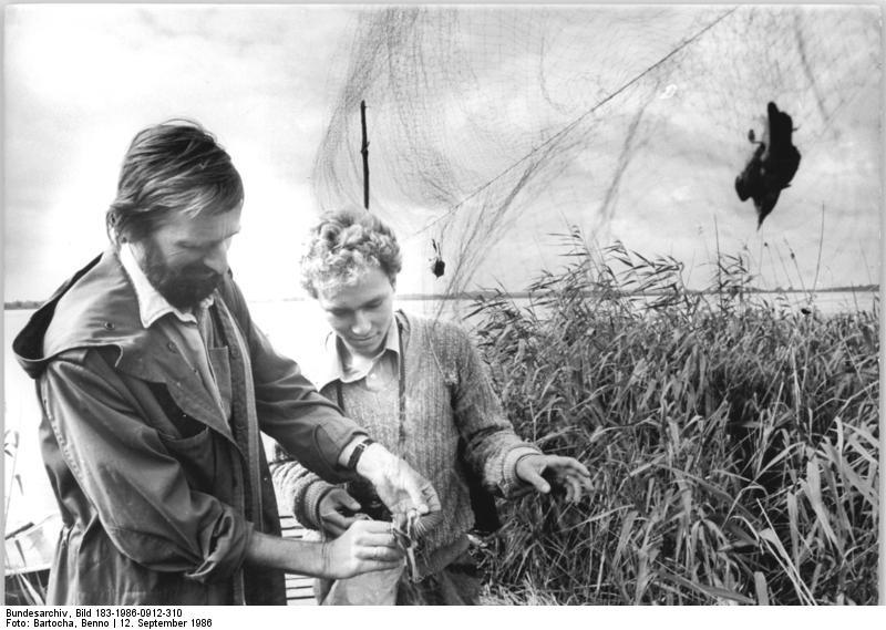 File:Bundesarchiv Bild 183-1986-0912-310, Putzar, Vogelschutzaktion.jpg