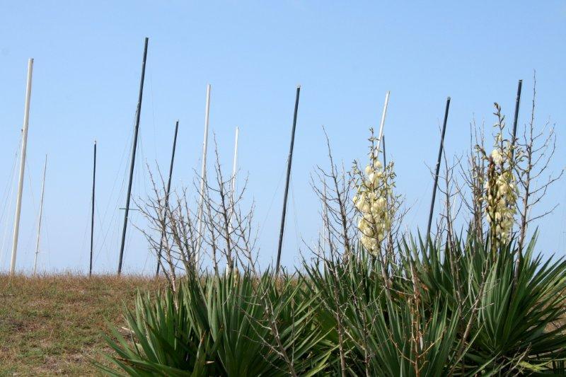 Fiori Yucca.File Fiori E Alberi Artificiali 1 Jpg Wikimedia Commons