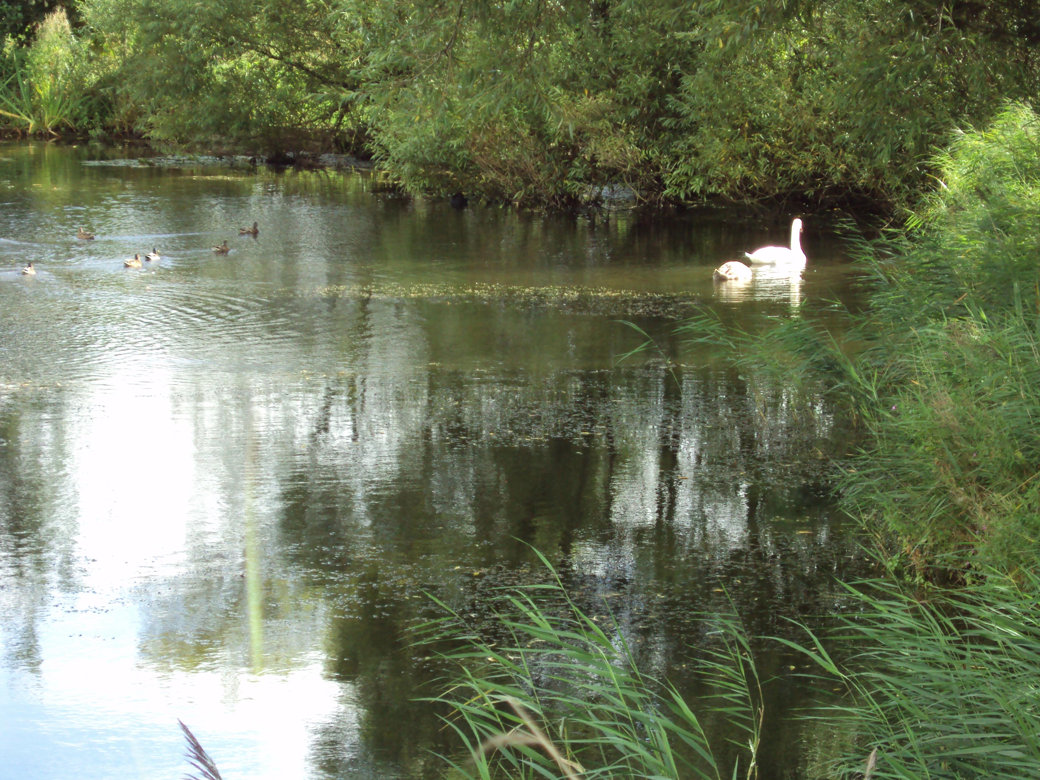 File:Fishing pond, Meols.JPG - Wikimedia Commons