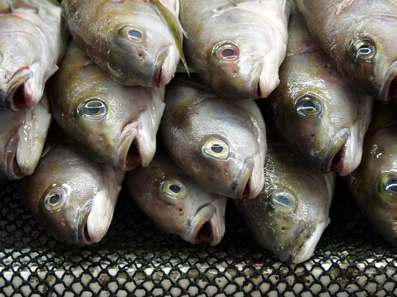 File:Fishmarket 03.jpg