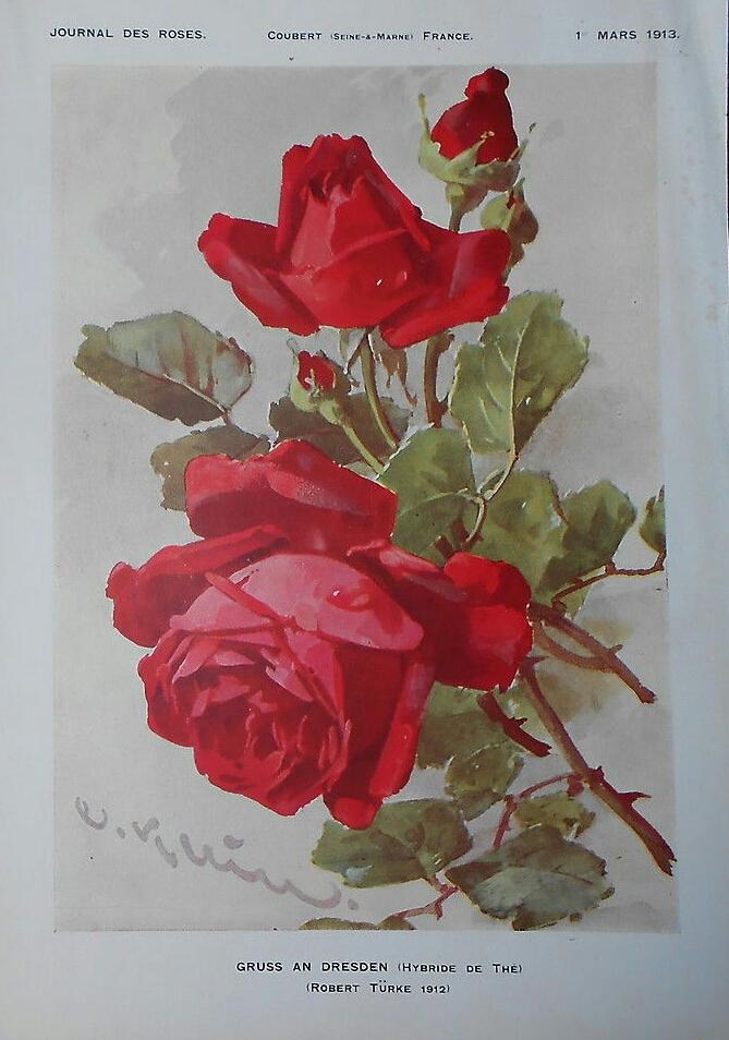Filegruss An Dresden 1912jpg Wikimedia Commons