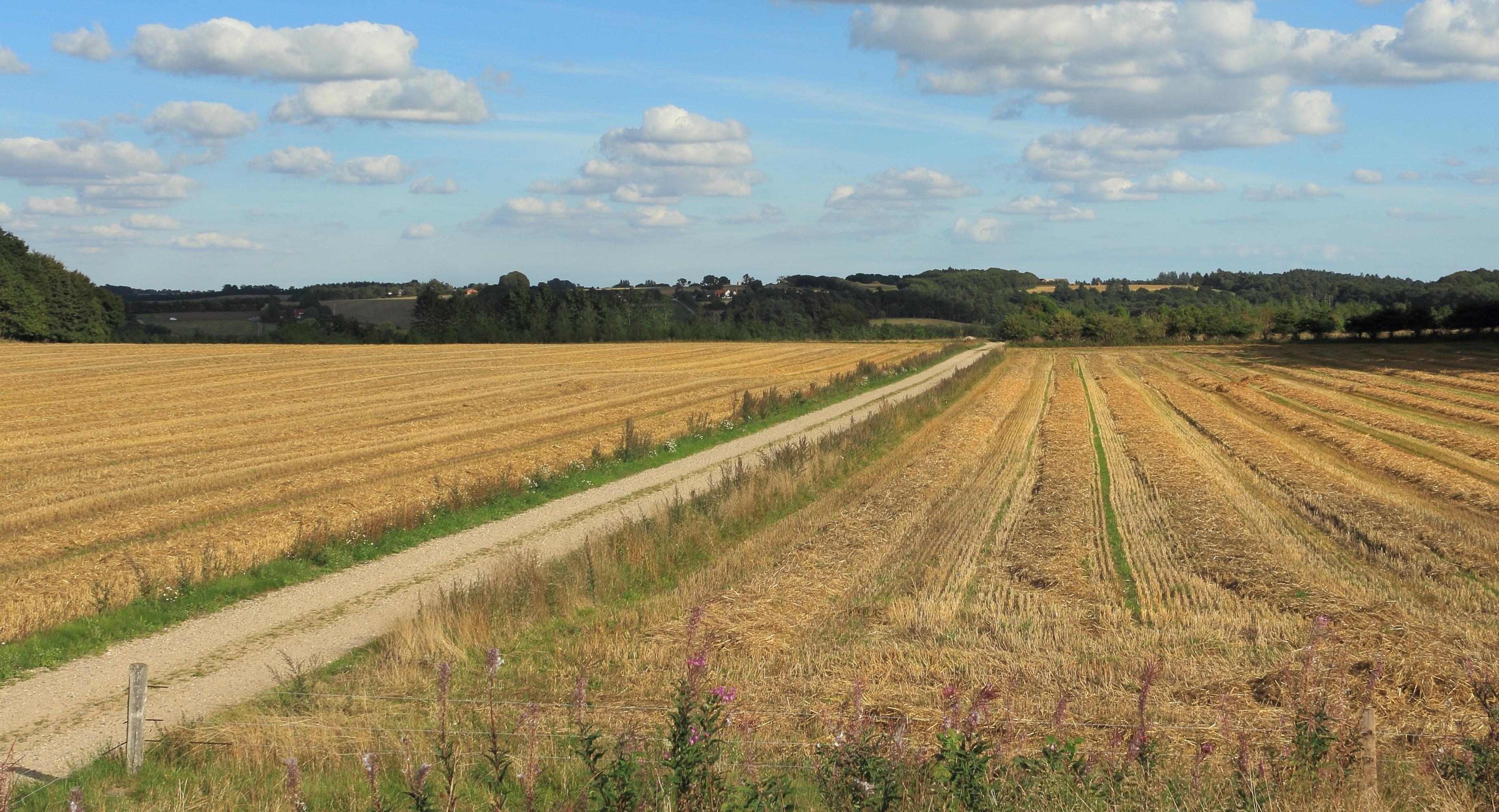barley fields by nitrok - photo #37