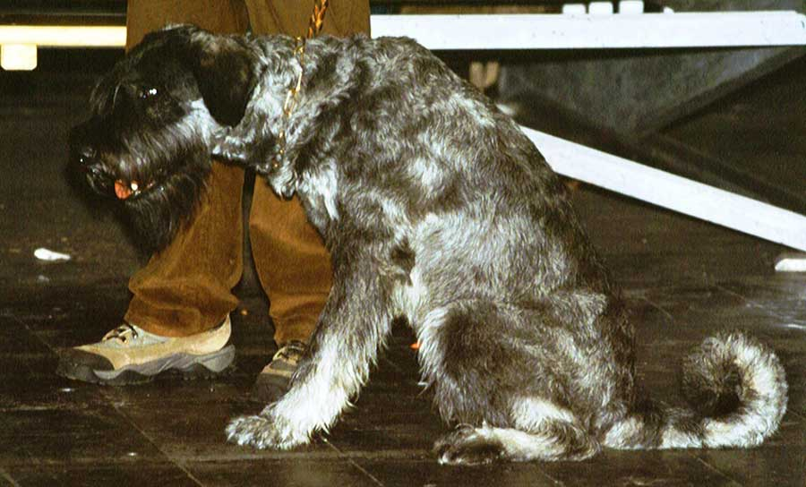 Alaskan Wolfhound | Dog Breeds Picture