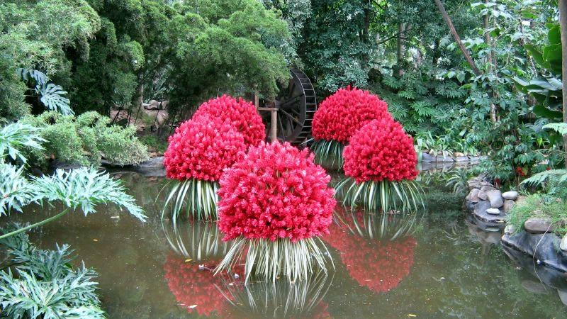 File jardin botanico plantas acuaticas - Plantas de sol directo ...