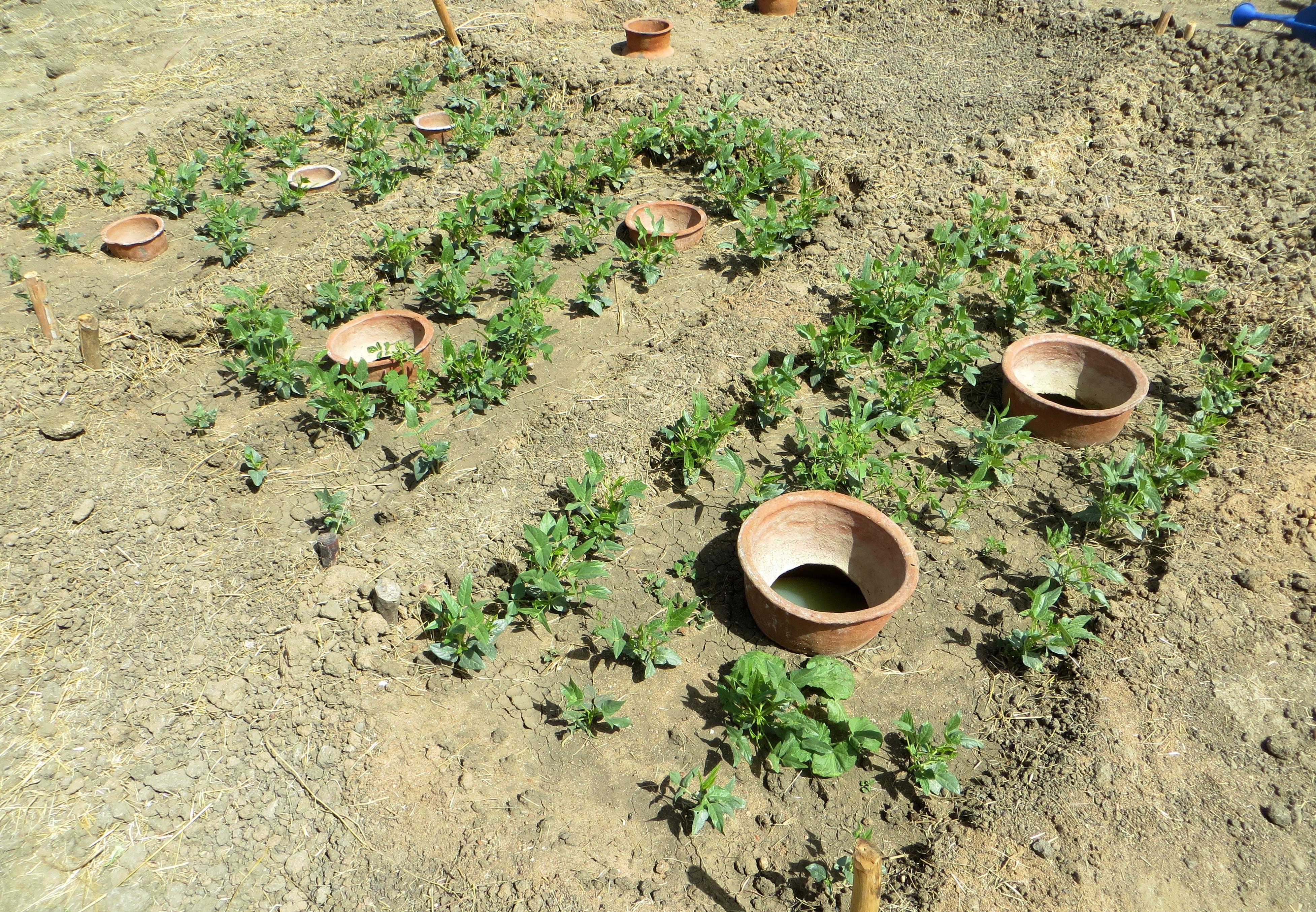 Deboucher Canalisation Avec Tuyau Arrosage irrigation par jarre — wikipédia