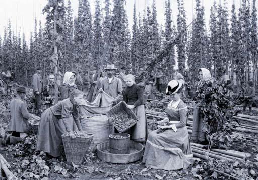 Cosecha de lúpulo en el Reino de Bohemia en 1898