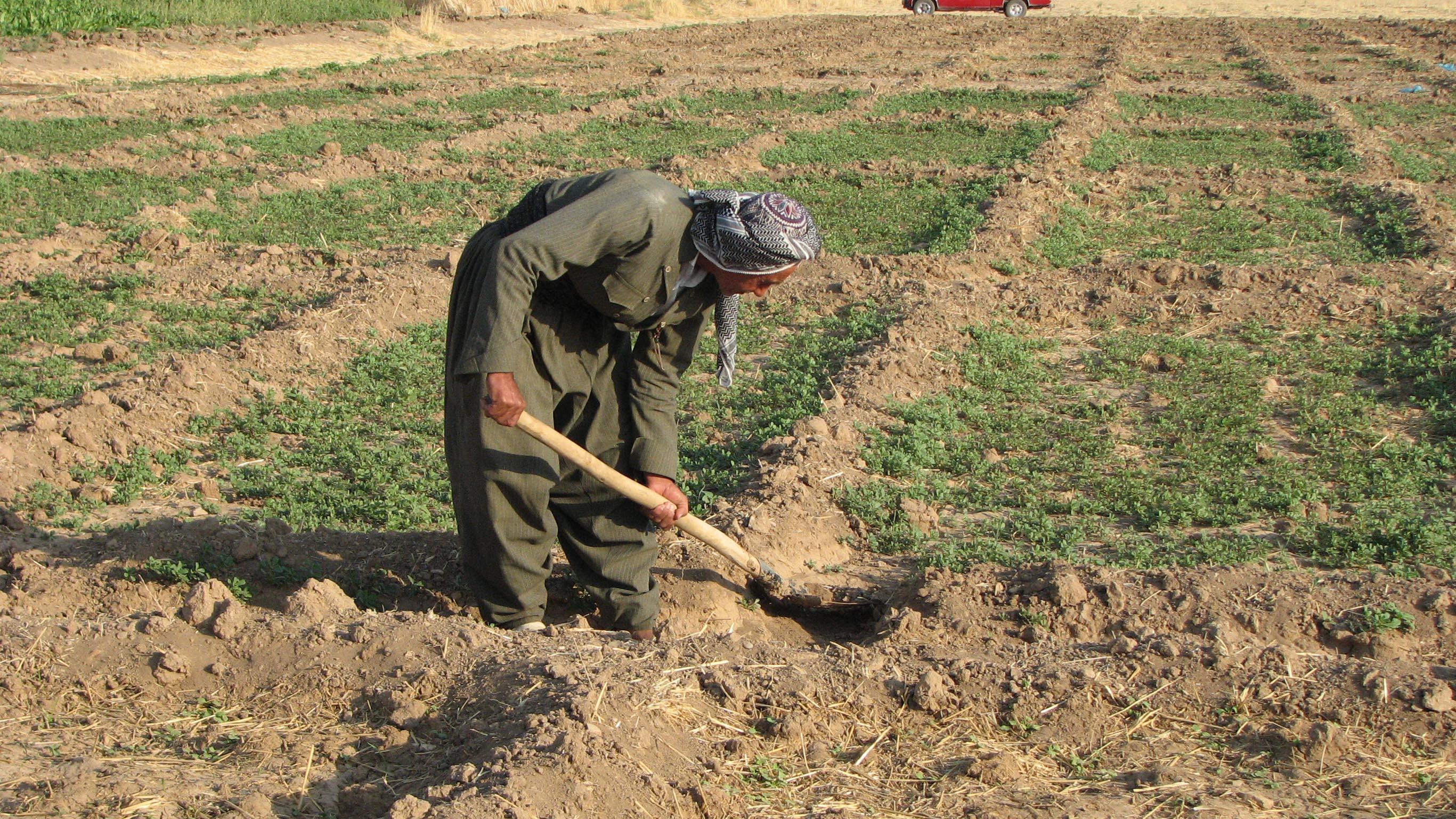 File:Kurdish farmer in Iraq.jpg - Wikimedia Commons
