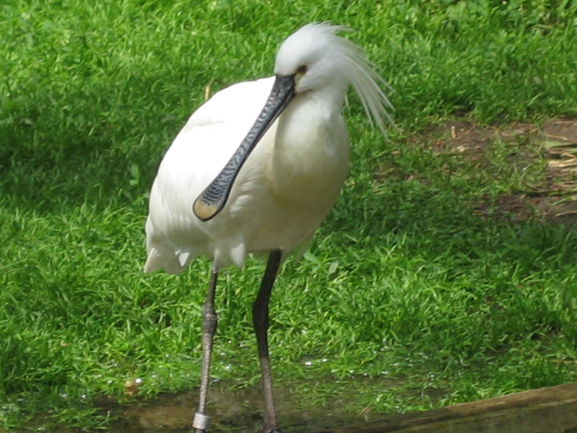 """Ишим среднее течение. птиц.  Степь.  На странице представлен вид.  """"биом."""