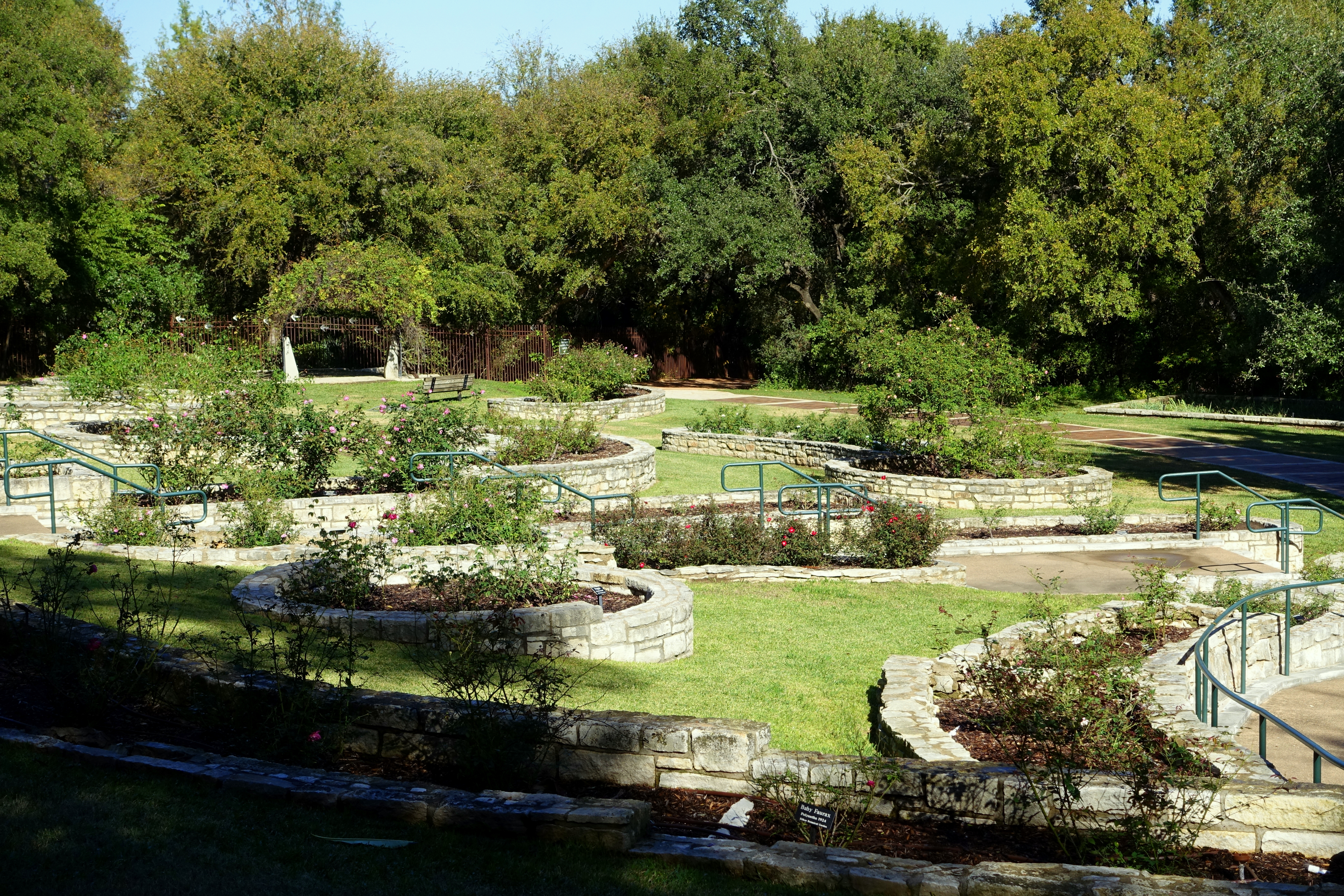 File:Mabel Davis Rose Garden   Zilker Botanical Garden   Austin, Texas    DSC08873