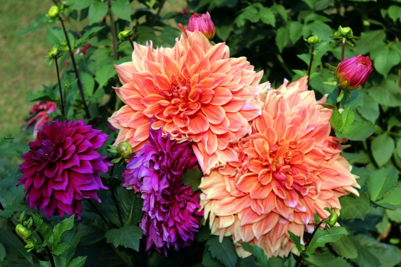 file mixture of different type of flowers jpg wikimedia commons