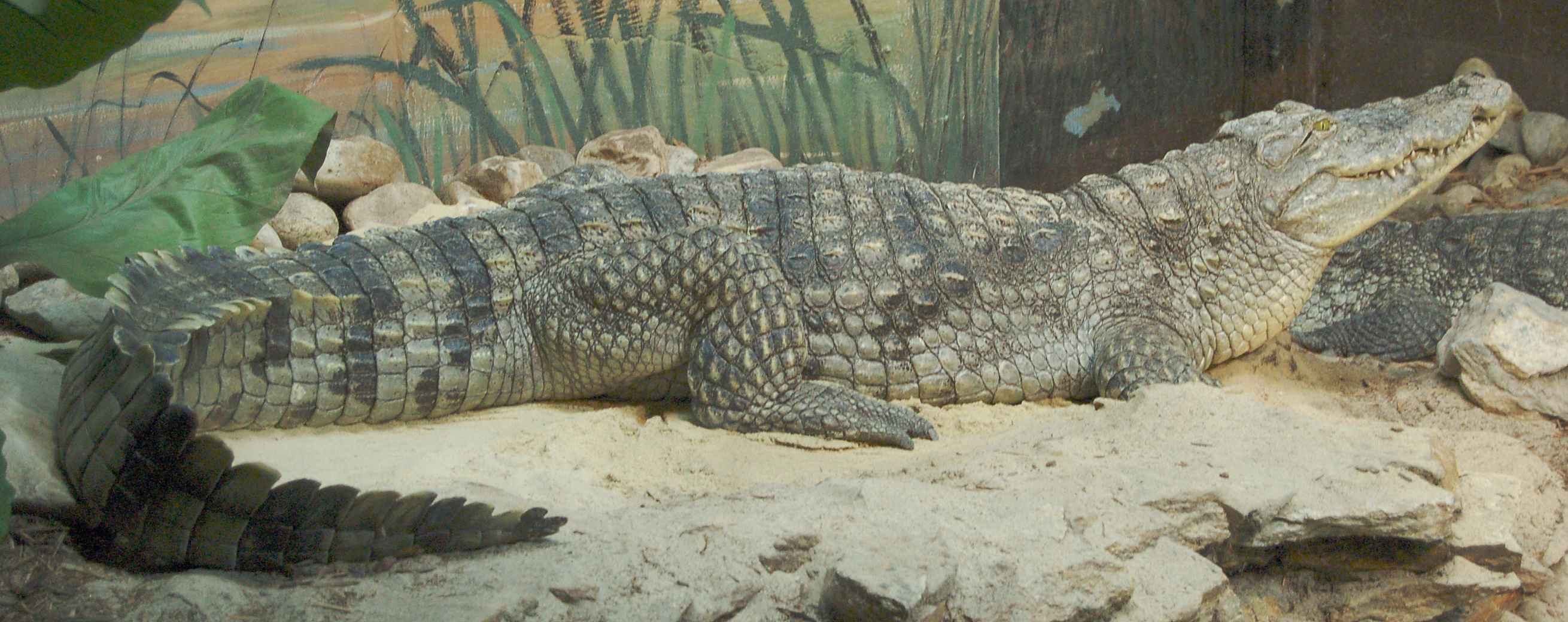 the nile crocodile Online shopping from a great selection at books store.