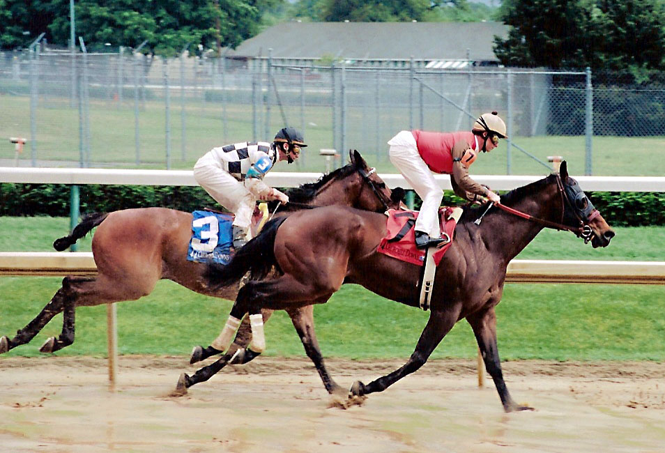 File:Off to the races.jpg  Wikipedia, the free encyclopedia