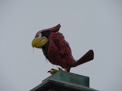 Reggie redbird wikipedia publicscrutiny Image collections