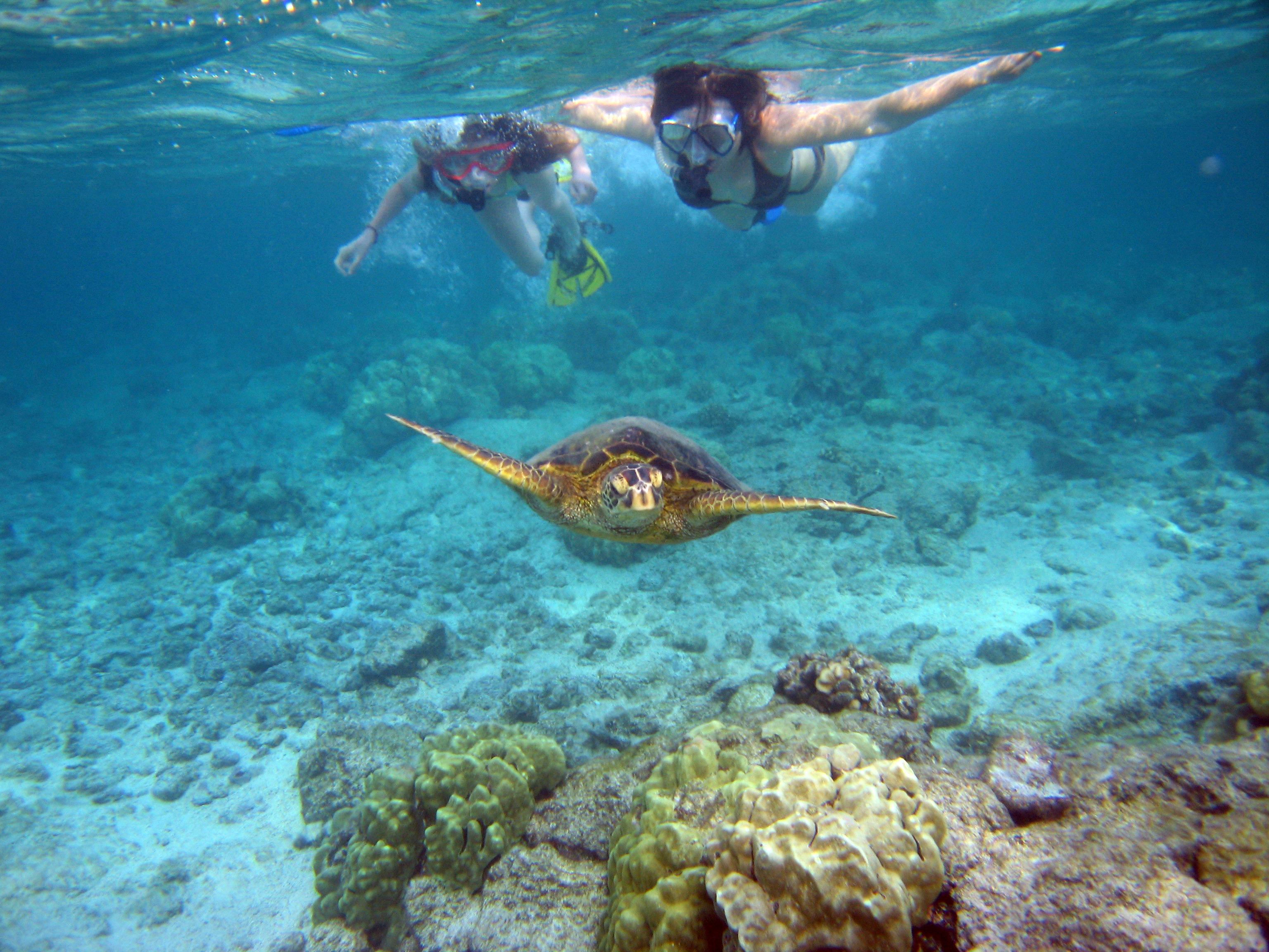 Seven Reasons To Visit The North S This Summer Hawaii Resorts Turtle Bay Resort Oahu
