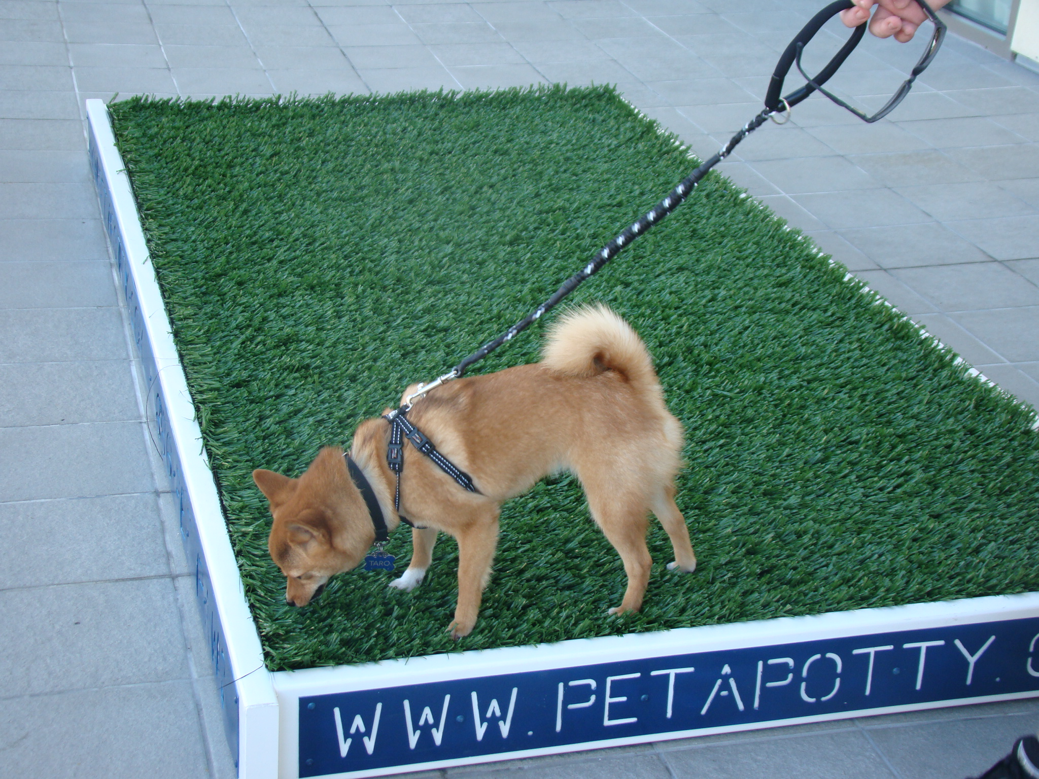 Image Result For Dog Potty Training